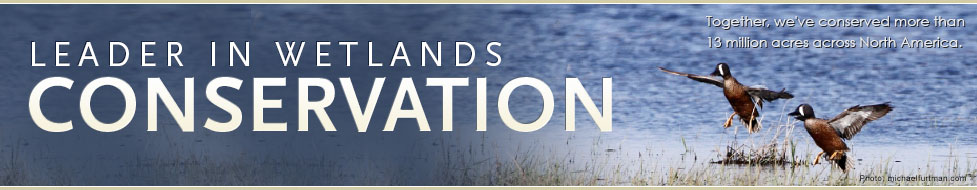 Ducks Unlimited: Leader in Wetlands Conservation