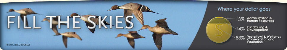 Ways to Support Ducks Unlimited