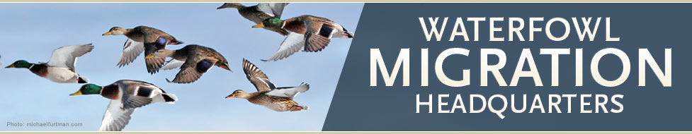 Ducks Unlimited: Waterfowl Migration Headquarters