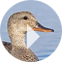 Ducks Unlimited Videos