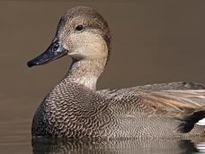 Your Ducks